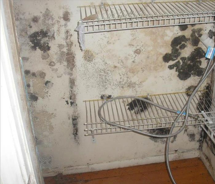 Mold In Apartment: Mold Removal And Remediation, Including Black Mold
